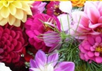 12% DISCOUNT AT FLOWERS DIRECT